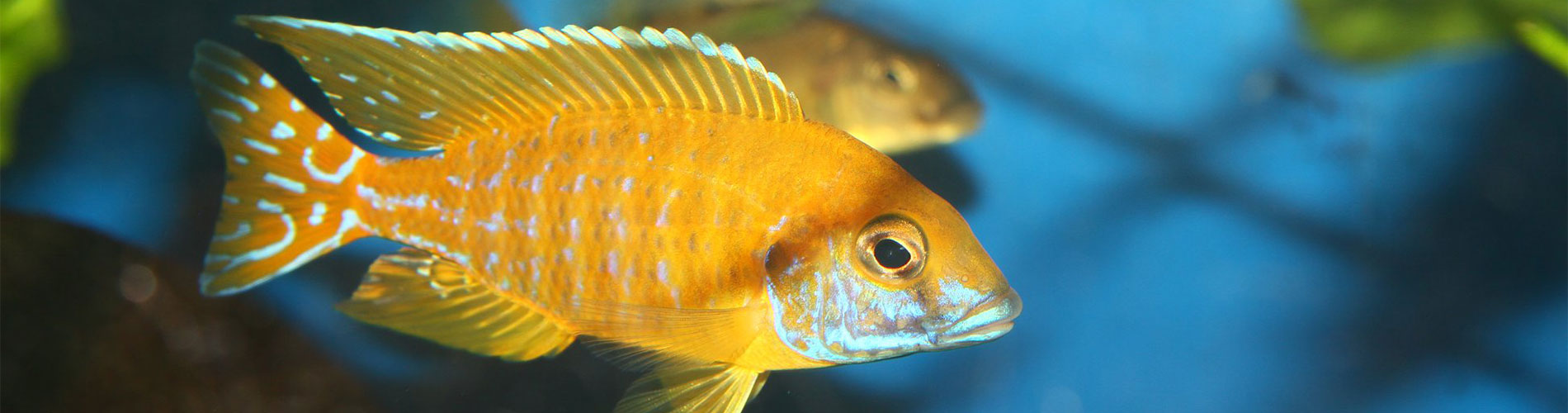 AQUAPASSION 45 : Le spécialiste en aquariophilie